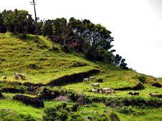 PICO (Isole Azzorre) - Portugal - di Guido Tosatto