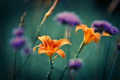 dancing flowers | Flickr - Photo Sharing!