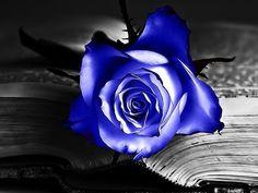 Las flores favoritas de Sara