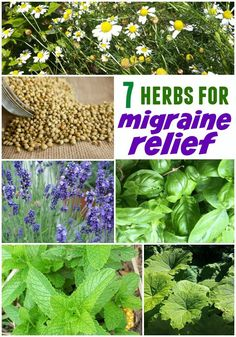 7 Herbal Remedies for Headaches and Migraines