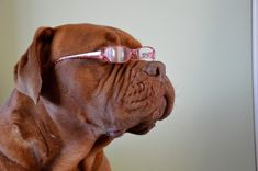 How To Tell If Your Dog Is Losing Its Sight ... see more at PetsLady.com ... The FUN site for Animal Lovers