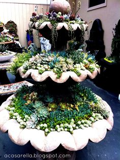 Plant succulents in an old fountain.