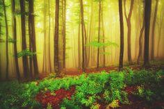 Enjoy the joy of autumn by serban bogdan on Joy, Autumn, Unique, Plants, Decor, Decoration, Fall Season, Glee, Fall