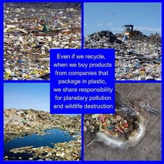 "Since most people do not recycle, our support of these companies is causing more plastic waste to be added to our oceans and landfills. Just one plastic tub, such as those that are common in ""natural"" food stores, is equal in weight to 22 plastic bags. What kind of sense does it make for a store to encourage customers to bring their own cloth bag only to fill it with plastic containers equal to hundreds of plastic bags? Whether we plan to recycle or not, by supporting companies that use…"