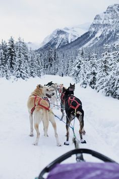 Dog Sledding the Great Divide | Thrifts and Threads