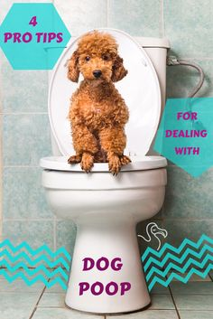 For people with pups as pets, dealing with dog poop is a universal necessity. Here are four easy ways to minimize the ick factor so you can focus on the fun stuff.