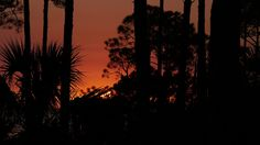 Just a little sunset through the thicket