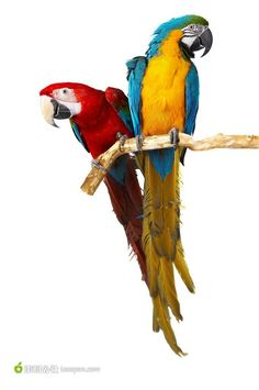 Macaw Parrot Cages (Large) – My Birds House