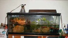 Amphibian Care >> Baby and Juvenile Aquatic Turtle Care (Red-eared sliders, painted turtles, etc.)