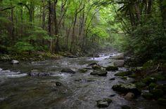 Smoky Mountain Solitude
