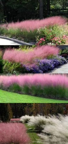 Clump-forming grass known for its pink-purple (avail in white also) colored inflorescence that float above the plant in an airy eye-catching display from September to Decemb Landscaping Plants, Front Yard Landscaping, Garden Plants, Drought Resistant Landscaping, Landscaping Ideas, Ornamental Grasses, Dream Garden, Garden Planning, Lawn And Garden