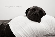 Maternity photography with dog. I really think this is sweet