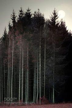 for more wallpapers http://ift.tt/1WArfgQ and http://ift.tt/1WGbQM8 autumnfirforestsunrisewood