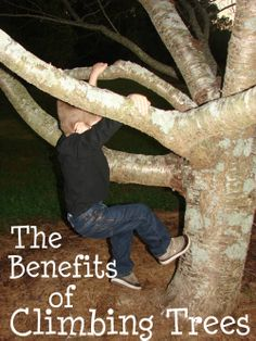 The Benefits of Climbing Trees- A wonderful and classic childhood activity!