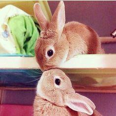 Image de cute, kiss, and bunny