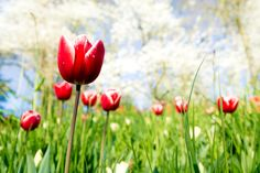 Frühlingsfotos von der Blumeninsel Mainau