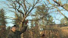 Obstbaumschnitt Der Kurs Praxis Kap.11+12: Schnittbeginn 1. Leitast