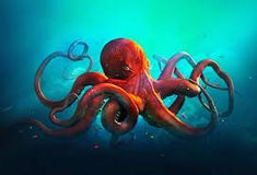 Image result for octopus photo