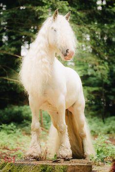 Pferd, Tinker, Behang, Gypsy horse, fairy