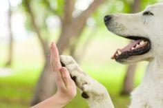 Hirnscan beweist - Hunde haben Gefühle