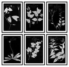 Black & White Botanical Bundle