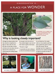 "a place for wonder - documentation on ""why is looking closely important? Kindergarten Inquiry, Full Day Kindergarten, Inquiry Based Learning, Preschool, Reggio Classroom, Outdoor Classroom, Classroom Labels, Learning Stories Examples, Reggio Documentation"