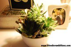 Desktop succulent via Blonder Ambitions