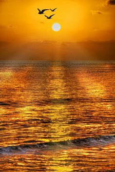 Beautiful sunset over the ocean Beautiful World, Beautiful Places, Beautiful Pictures, Amazing Sunsets, Beautiful Sunrise, Beautiful Morning, Mellow Yellow, Yellow Sky, Golden Yellow