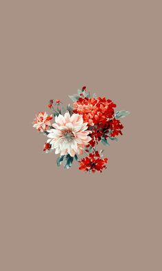 Flower Background Wallpaper, Flower Phone Wallpaper, Cute Wallpaper Backgrounds, Pretty Wallpapers, Love Wallpaper, Simple Iphone Wallpaper, Iphone Wallpaper Vsco, Aesthetic Iphone Wallpaper, Aesthetic Wallpapers