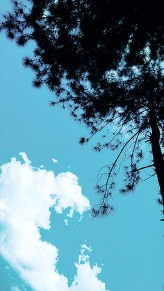 At Hutan Pinus Talaga Pancar |  Majalengka