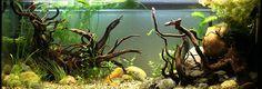 Aquascaping – Making your Aquarium Look Awesome! Planted Aquarium, Aquarium Aquascape, Aquarium Tropical, Diy Aquarium Stand, Aquarium Ideas, Fish Aquariums, Aquascaping, Aquarium Design, Freshwater Aquarium