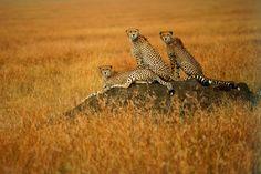 Amazing Wildlife Photography - Suha Derbent (18 photos) - My Modern Metropolis