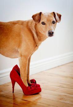 #kissmyshoe #animaux #chaussures