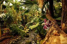 Orchideeën hoeve in luttelgeest