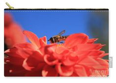 Flowers fly on dahlia 1 Carry-All Pouch by Sverre Andreas Fekjan. Our pouches are great. They're availabe in sizes from x up to x Each pouch is printed on both sides (same image). Iphone 6 Cases, Dahlia, Carry On, Presentation, Pouches, Flowers, Prints, Photograph, Image