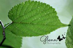 Glenn Studios:  Glenn Photography Cobblestone Lodge Steeleville, Missouri