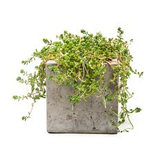 Repose Eco-concrete Charcoal Grey Cube Planters - Overstock Shopping - Great Deals on Planters, Hangers & Stands