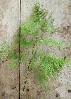 plumosa fern - might be better than the amaranthus - definitely lighter
