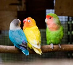 Expressive Bird Nests X 2 Breeding Nest Bird Box Bamboo Nest Canary Finch Budgie 5 X 3 Inch Bird Supplies Pet Supplies