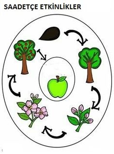 Education to the Core: Apple Life Cycle Graphic Organizer Freebie! Generate background knowledge or organize information from the text with this easy graphic organizer offered with and without pictures! Apple Activities, Sequencing Activities, Science Activities, Thinking Maps, Cycle Pictures, Apple Life Cycle, Apple Unit, Kindergarten Fun, Preschool Classroom