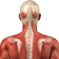 Low Back - Myofascial Pain Syndrome (muscle pain)