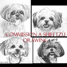 Hey, I found this really awesome Etsy listing at https://www.etsy.com/listing/97557150/custom-charcoal-pencil-shih-tzu-drawing