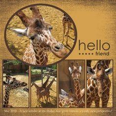 zoo scrapbook layout
