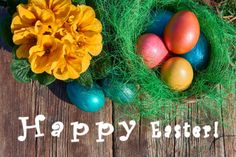 easter eggs in nest on old wooden background with yellow flower and