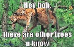 Hey Bob....