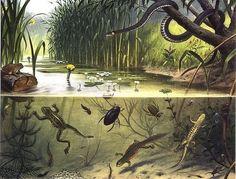 In Pond and Stream, aka Pond Life, by Dutch illustrator M.A. (Marinus Adrianus) Koekkoek II   taringa.net