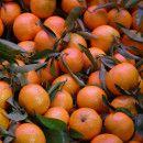 16 frutas con índice glucémico bajo beneficiosas en caso de diabetes o sobrepeso ecoagricultor.com