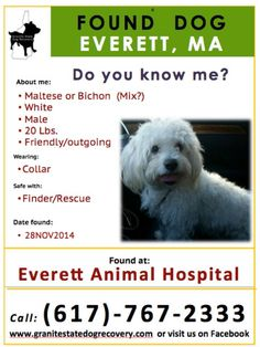 28NOV2014-FOUND-EVERETT, MA: A friendly, male, solid white Maltese, Bichon or related (Mix?) dog @ 20 lbs. was found at Everett Animal Hospital wearing a collar. If you know this dog, please CALL: (617)-767-2333. PLEASE SHARE to help find his boy's family (dv) — with Stacia Gorgone.