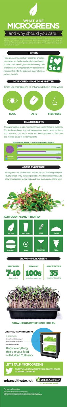 Microgreens Infographic | Urban Cultivator