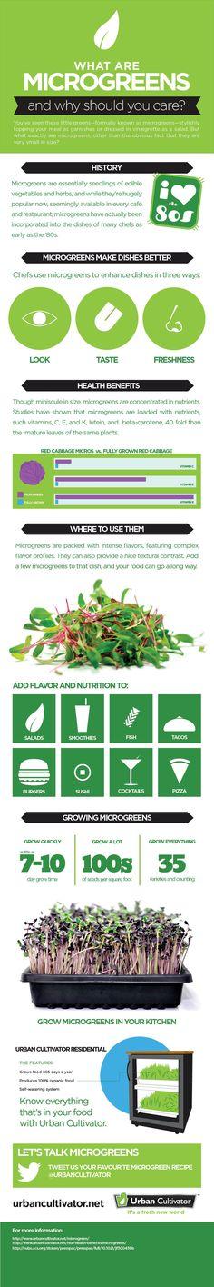 Microgreens Infographic | Urban Cultivator